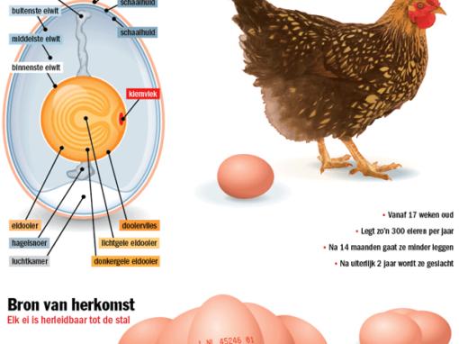 Anatomie van het ei